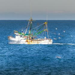 Shrimp Boat off Jennette