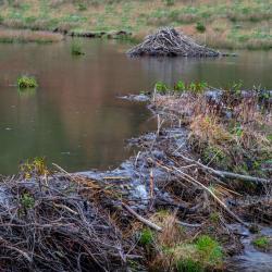 Beaver Ponds near Monterey VA