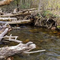Favorite Wild Creek for Fly Fishing