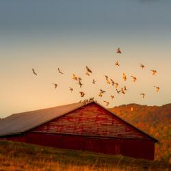 Barn at Sunrise in Blue Grass VA