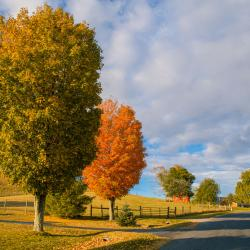 Fall trees in Blue Grass Va