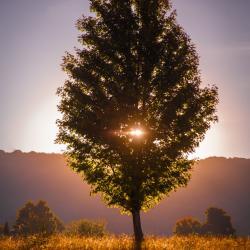 Morning dawns through the tree