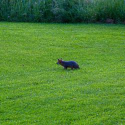 Baby Foxes Front Yard