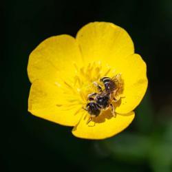 Bee Getting Polen