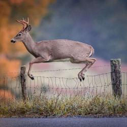 6 Point Buck Jumping Fence 3