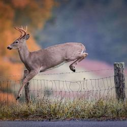 6 Point Buck Jumping Fence 4