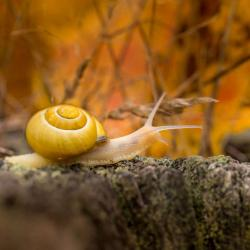 Snail in the Fall Season