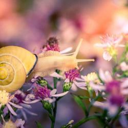 Snail in the Fall Season on a Flower