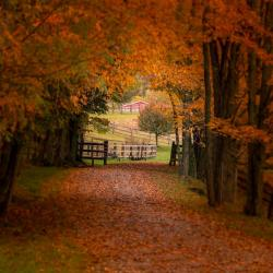 Driveway to a farm in Highland County VA