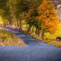 Backroad in Highland County VA