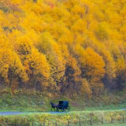 Amish Buggy in Highland County VA
