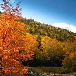 Shavers Fork river in the fall