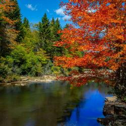 Shavers Fork river in the fall season