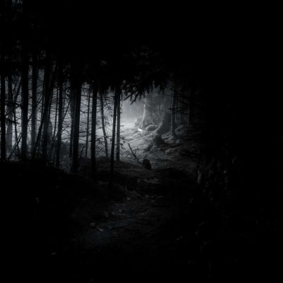 Gaudineer Knob Spruce Pine Forest