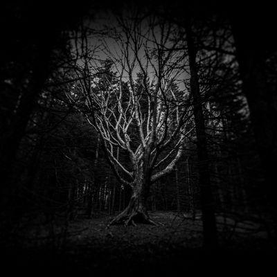 Magic Tree Dolly Sods