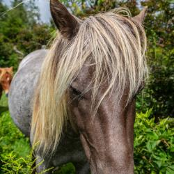Wild Ponies Grayson Highlands