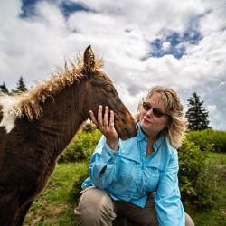 Wild Pony Grayson Highlands