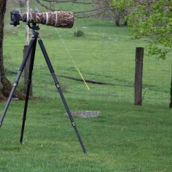 Canon Camera 7D MarkII, Canon EF 600mm f/4L IS USM, Jobu Design Algonquin Carbon Fiber Tripod, Jobu Design DMG-HD4 Gimbal Head MK IV