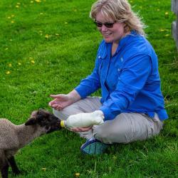 Kim Feeding a Fair Lawn Farm Lamb