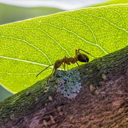 Ant in shade
