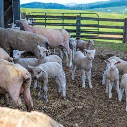 Fair Lawn Farm Monterey VA