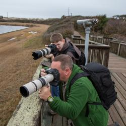 Photographing White Pelicans from Pea Island