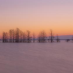 Trees at Lake Mattamuskeet early morning 10 Step ND filter