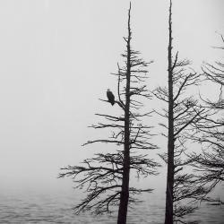 Bald Eagle Lake Mattamuskeet