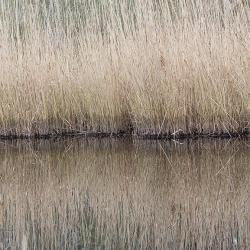Canal Lake Mattamuskeet
