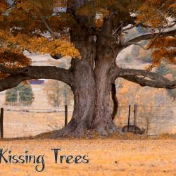 Look close you will see it--The kissing Trees
