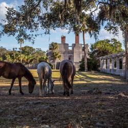 Horses at Cumberland Island National Seashore Dungeness Ruins