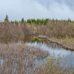 Beaver Lodge at Dolly Sods Wilderness WV