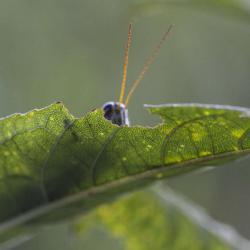 Grasshopper-peeking