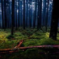 Gaudineer Knob WV Spruce Pine Forest