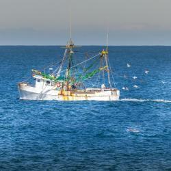 Shrimp Boat off Jennette