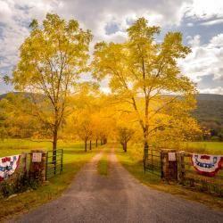 Beautiful driveway off Hwy 220