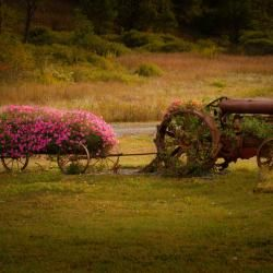 Old Tractor in Flowers
