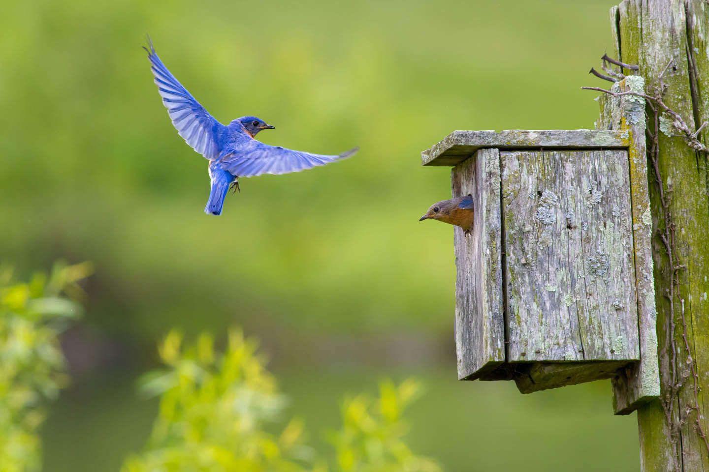 The Birds of Monterey VA