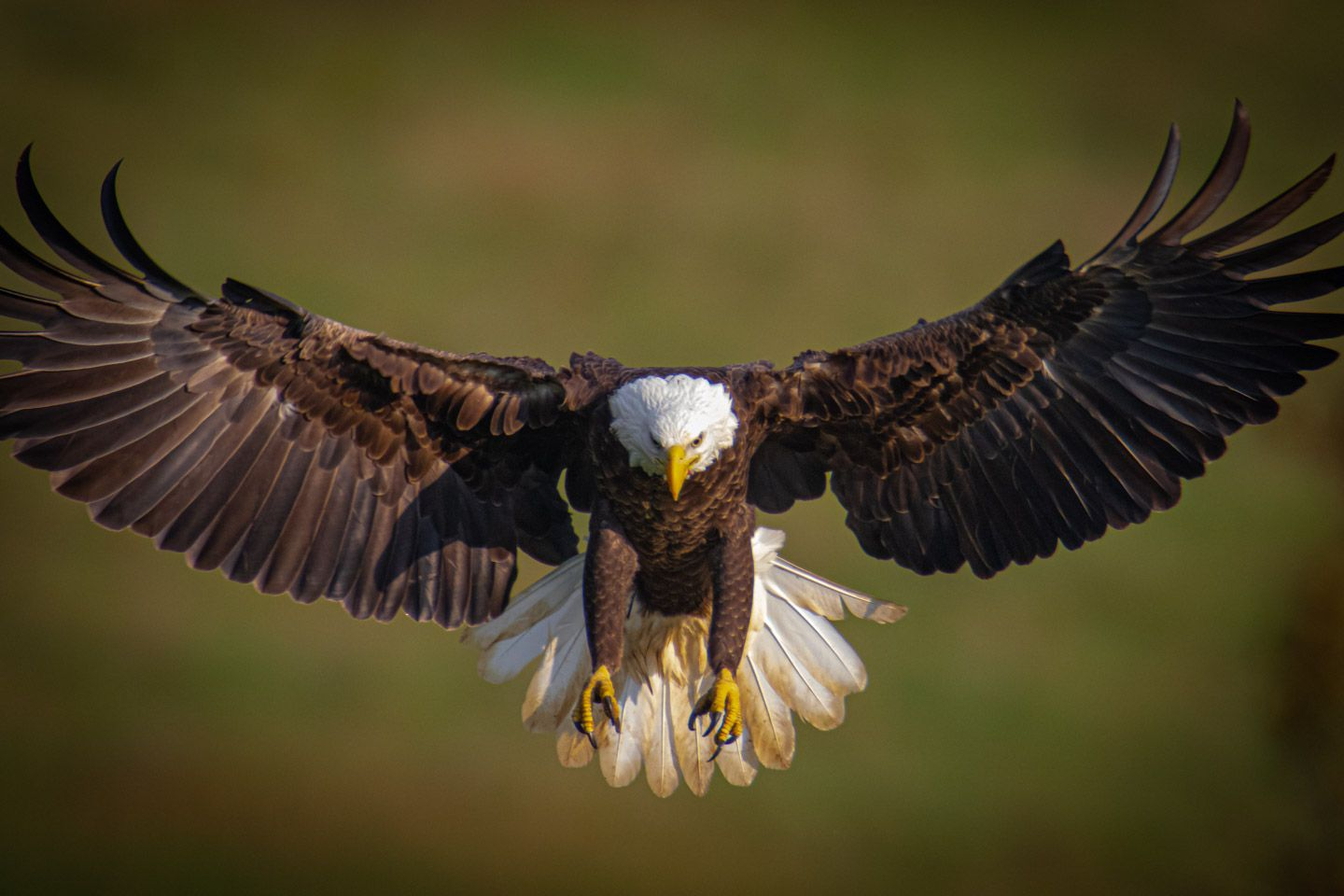 Highland County Eagles Photography