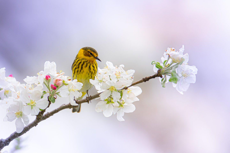 Bountiful Blessings of Birds - Monterey, VA