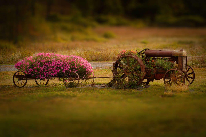 Highland County VA Fall Photography