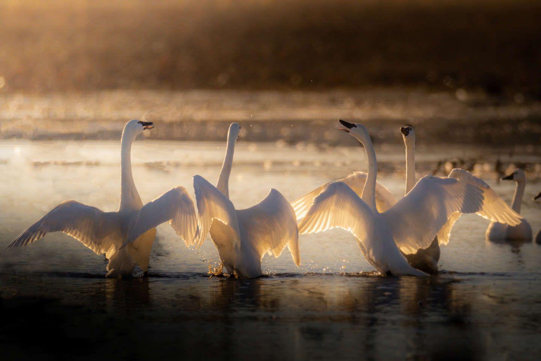Pocosin Lakes National Wildlife Refuge Bird Migration