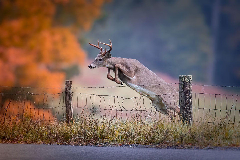 Fall Photography Highland County VA
