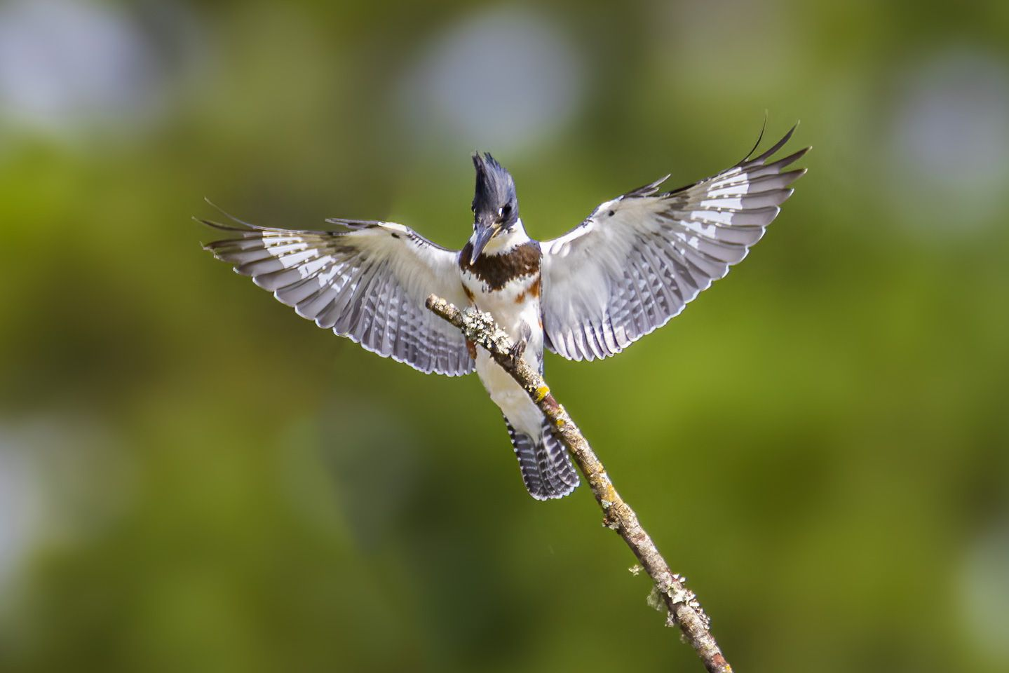 Pee Dee NWR Bird Photography