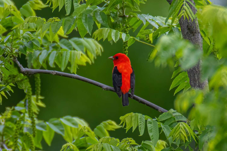 Bird Photography Highland County VA